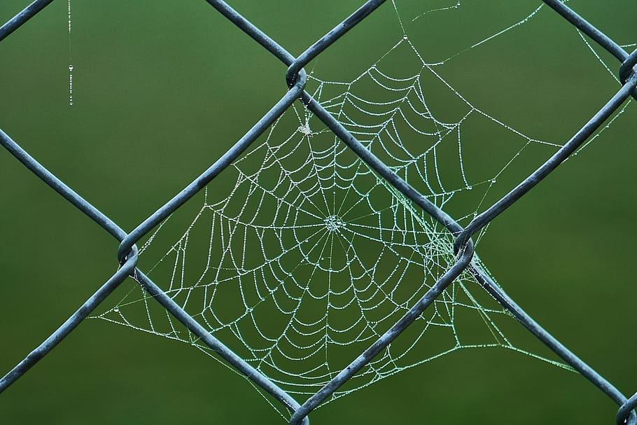 cobweb-wire-mesh-fence-dewdrop